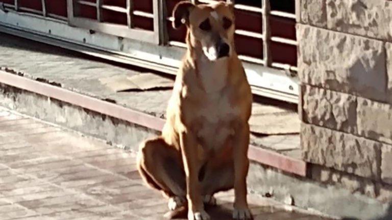 Bianca, la perrita que espera a su dueña fuera de su negocio a pesar de que murió hace una semana