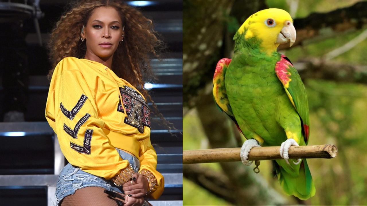 Loro Imita a Beyoncé