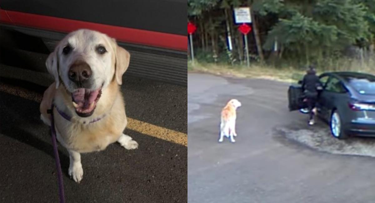 Mujer que abandonó a su perro en carretera enfrenta sanción