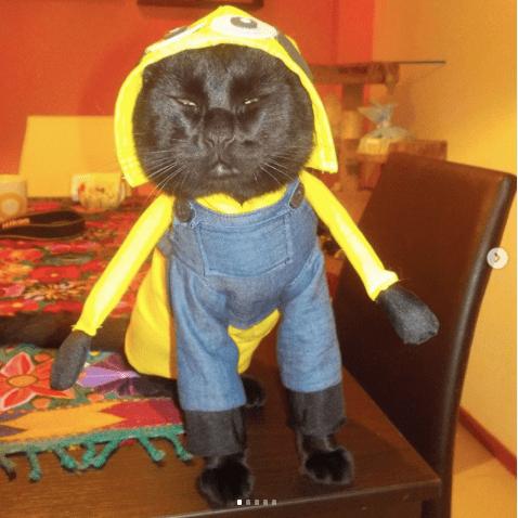 21 Disfraces para celebrar Halloween con tus perritos y gatitos