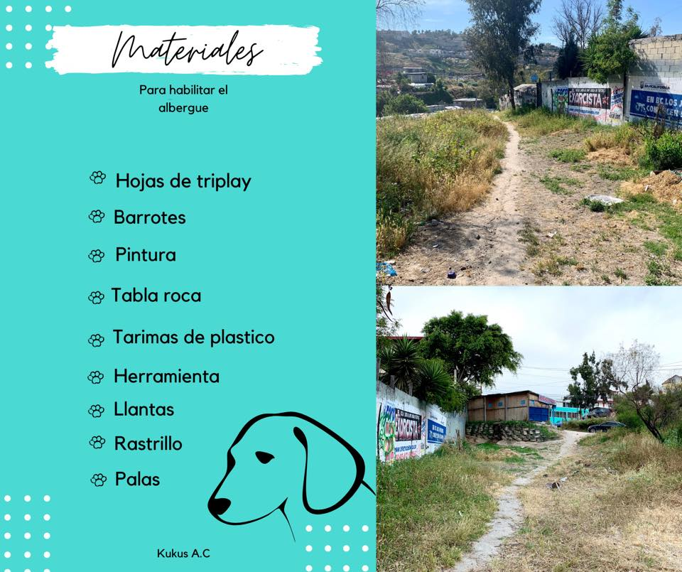 Crean albergue para perros callejeros en Tijuana