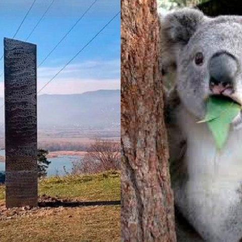 Meme del koala preocupado por el origen de monolitos y aliens