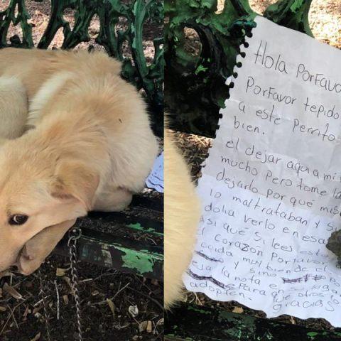 Abandonan a perro en banca de la CDMX