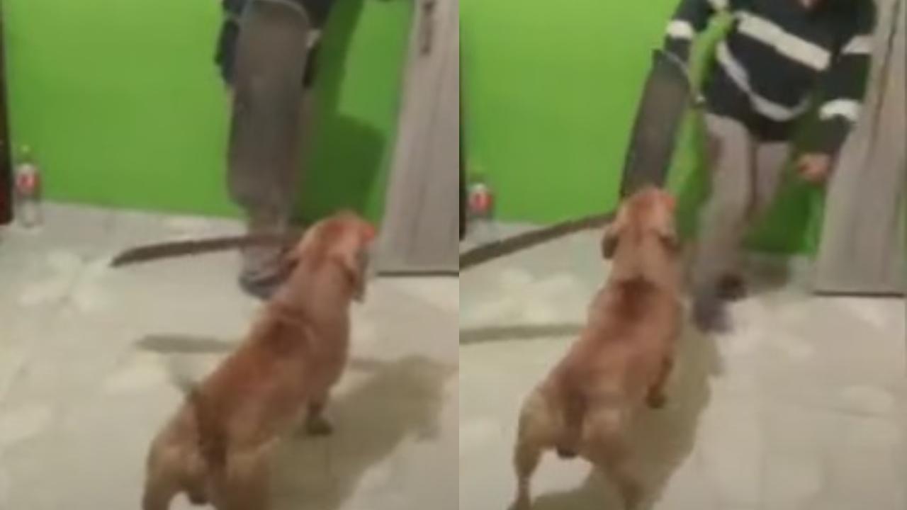 Perro con machete