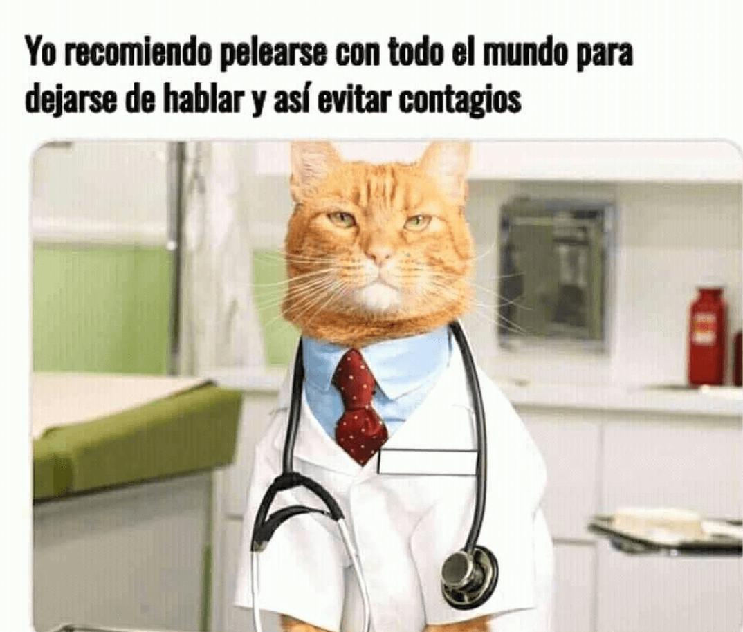 Meme del gato dando consejos