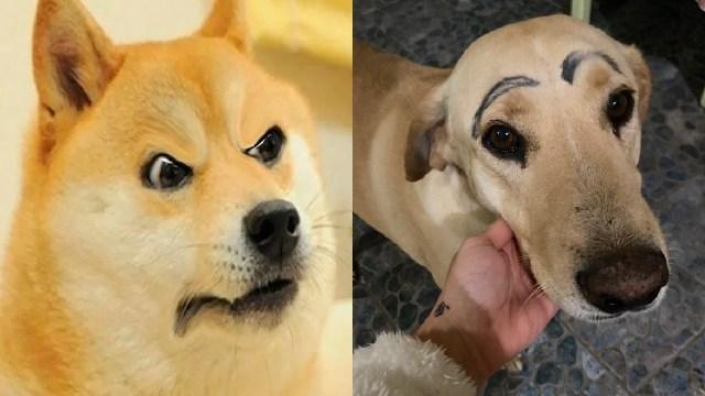 Perro con las cejas pintadas
