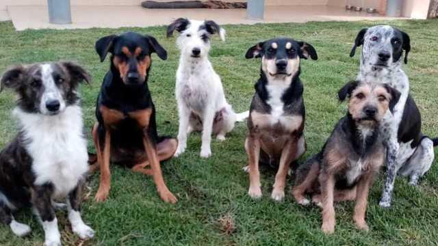 Perros en situación de calle en Puebla serán adoptados en Canadá