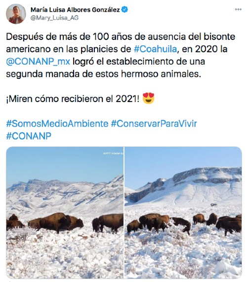 Tuit de los bisontes en Coahuila, México