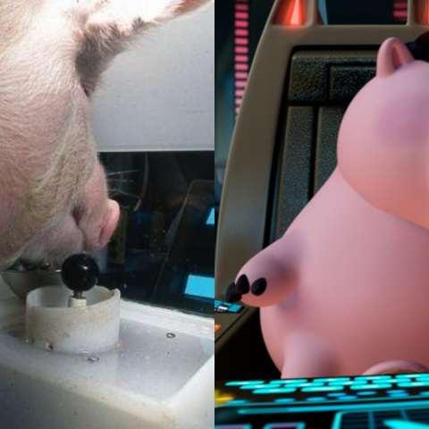 Cerdos jugando videojuegos