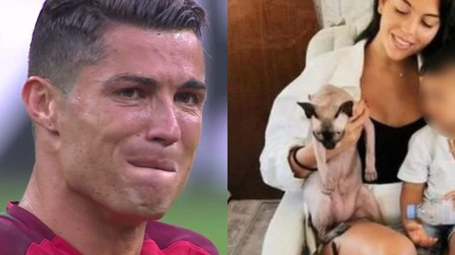 cristiano ronaldo gato jet privado veterinario atropellado
