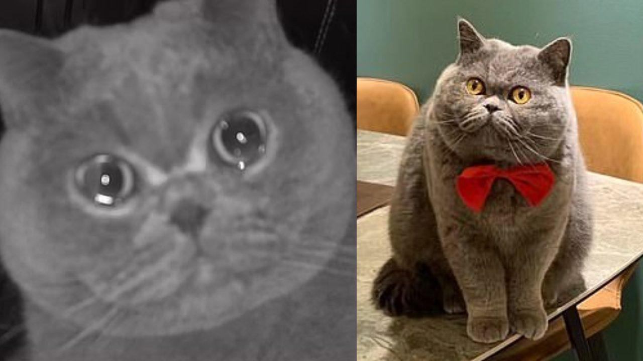 Gato Fu Fu lloró frente a la cámara porque sus dueños lo dejaron solo durante vacaciones