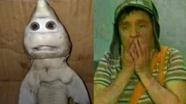 Tiburon cara bebé meme chavo