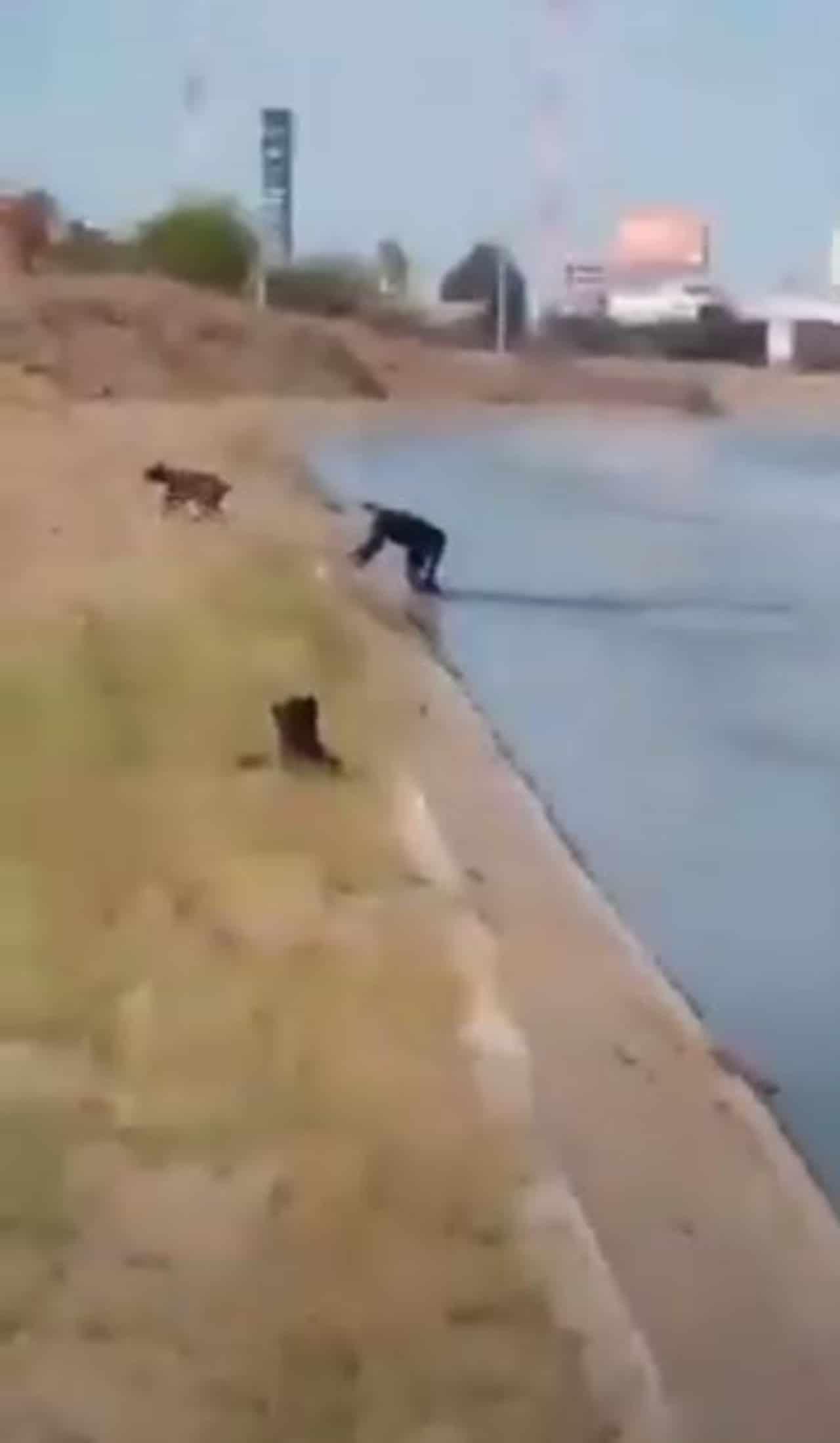 Policía Culiacán salva perro ahogarse canal