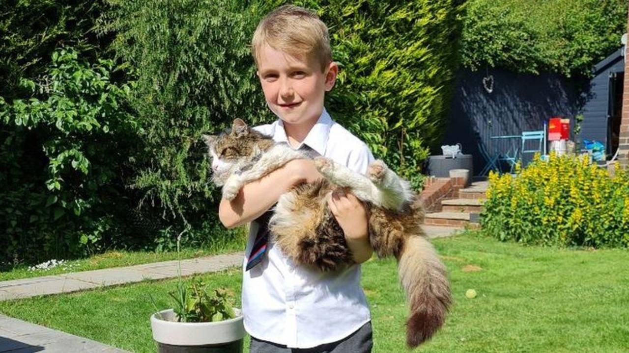 Frankie, el gato que revive tras incinerarlo