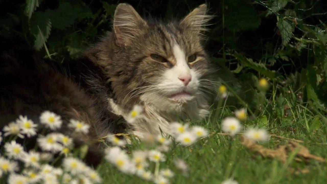 Gato revive y regresa a casa tras inicinerarlo