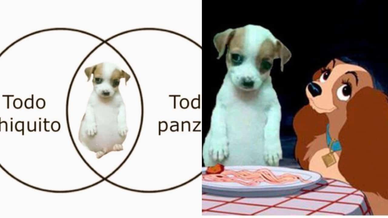 Mejores memes del perrito panson