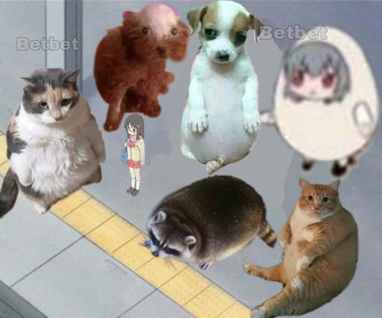 meme animales y perrito panson juntos