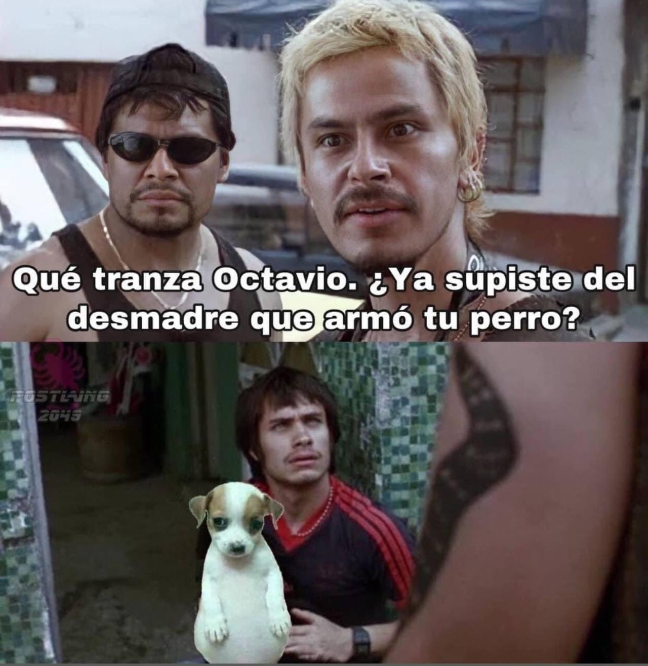 memes del perrito panson relajo