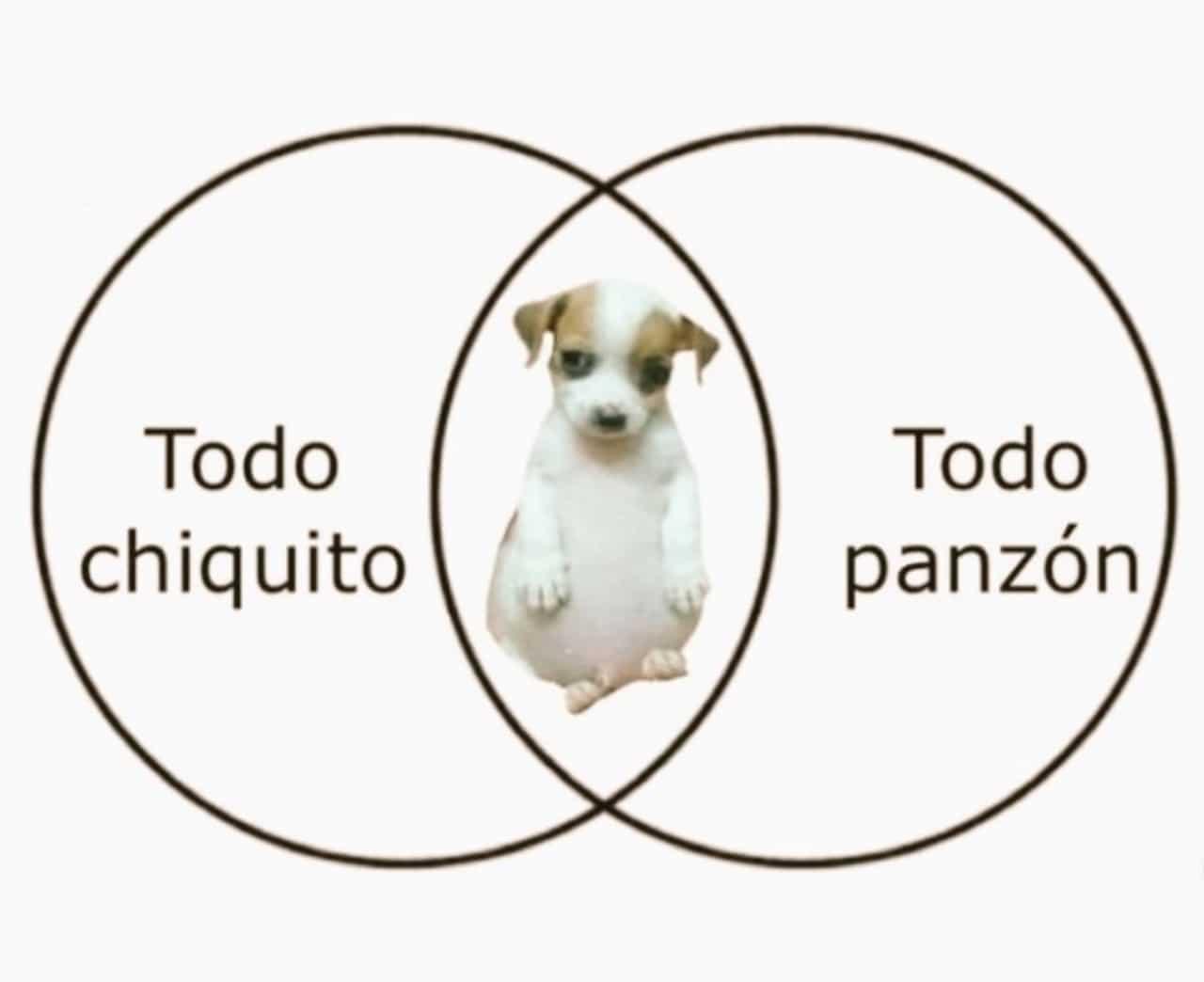 meme del perrito panson