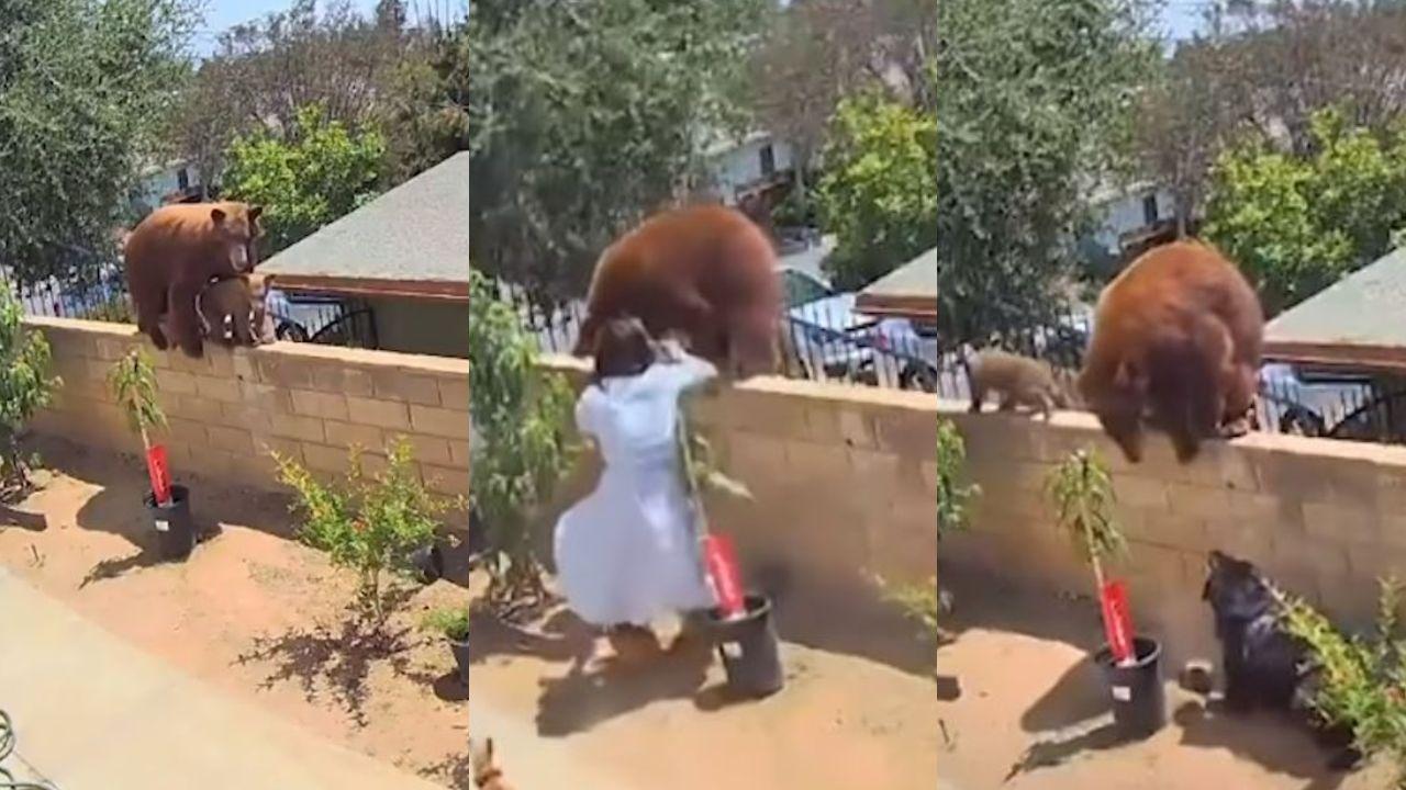 Mujer pelea con oso para salvar la vida de sus perros