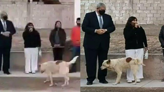 Video Perro orina a presidenta municipal mientras daba un discurso