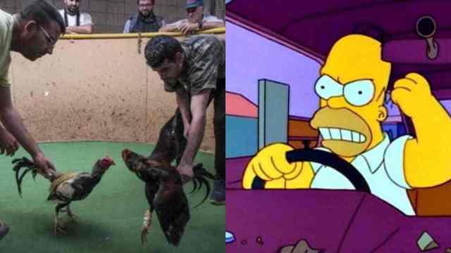 Hidalgo declara peleas de gallos como patrimonio cultural
