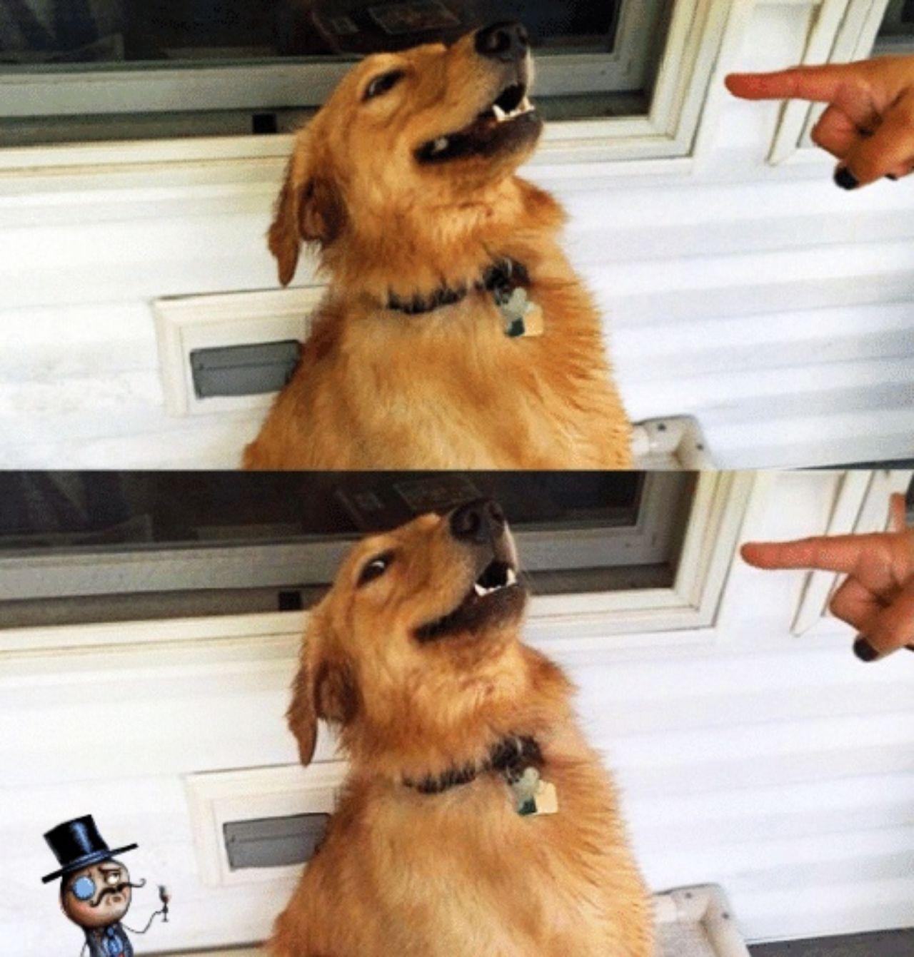 Meme perro siendo reganado dueno