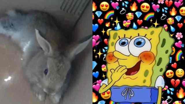 ¿Quién es Pana Rabbit el conejo que muy fresco se ve?
