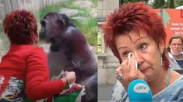 Mujer romance chimpancé zoologico prohibe entrada