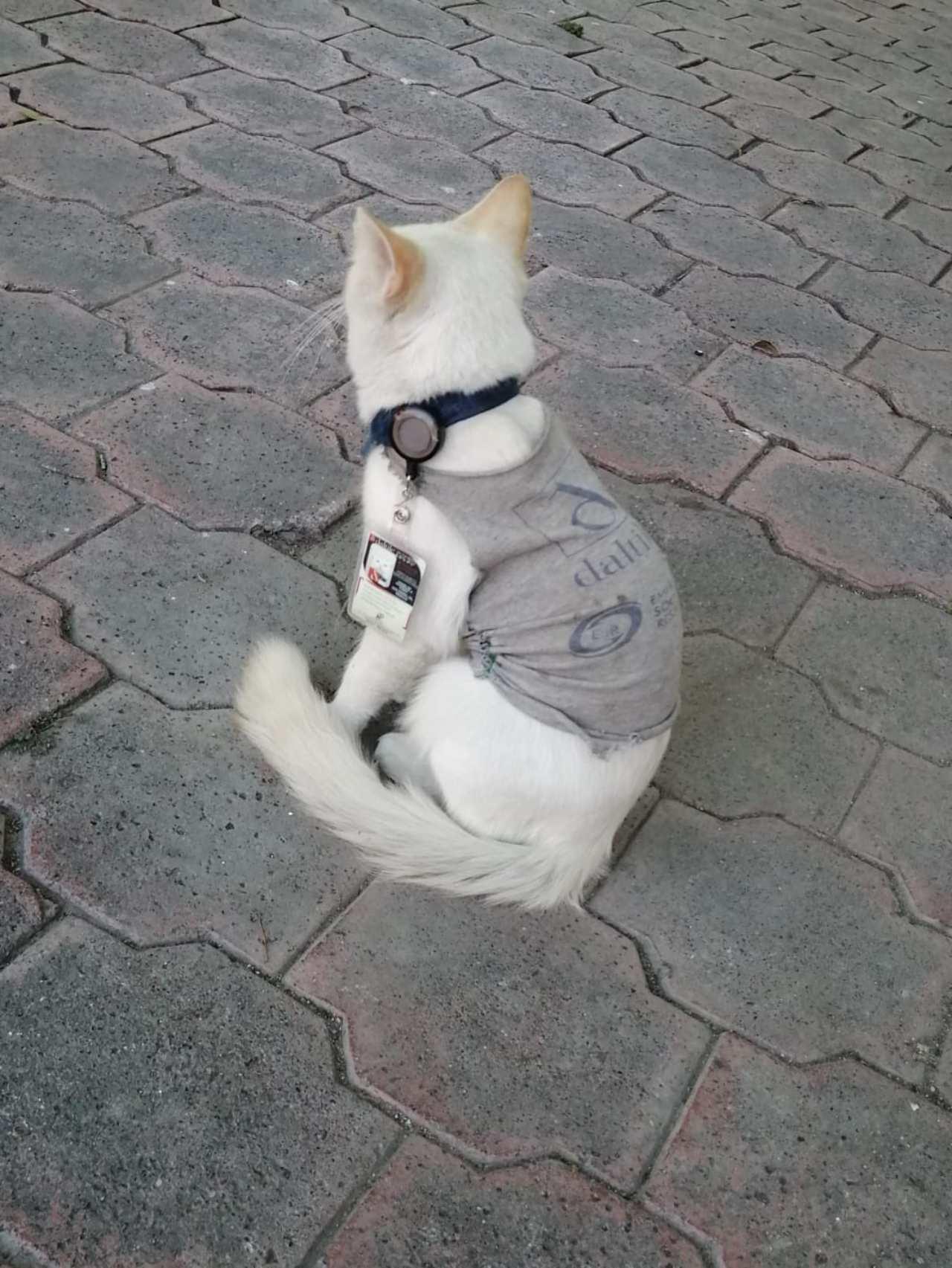 Contratan a gato en empresa de seguridad
