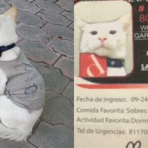 Empresa contrata gatito como empleado de seguridad