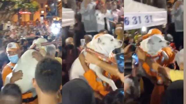 Organizan fiesta masiva a perrito que estuvo perdido una semana y lo alaban