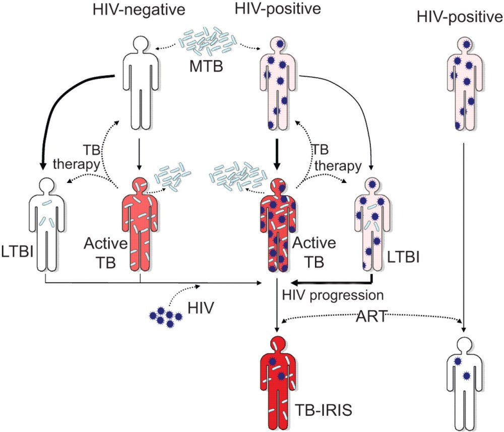 medium resolution of challenges and perspectives for improved management of hiv hiv aids lifecycle diagram of effects of hiv aids