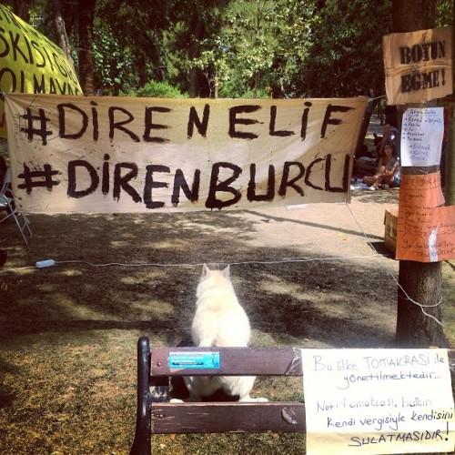 Occupy_Gezü_Büyükpark_İsgali2