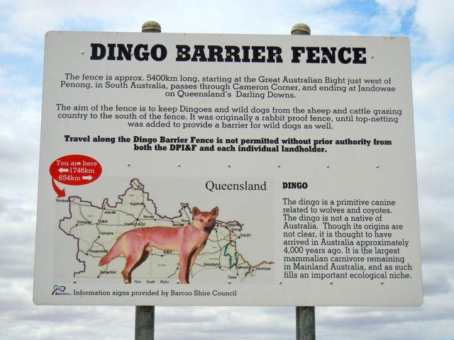dingo-dog-fence