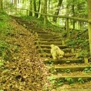 Treppe im Wald mit Holzgeläbder