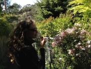 intoxicating jasmine flowers!
