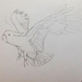 Quick cockatoo sketch
