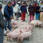 Sud America 2015/16 - Giorno #7 - Ecuador - L'idea del cazzo