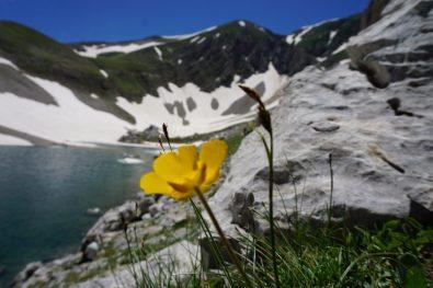 Giugno: sole, neve, fiori. E sei subito al top - Foto A. Gaetani