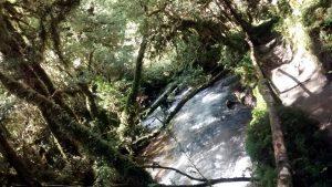 Bosque Encatando