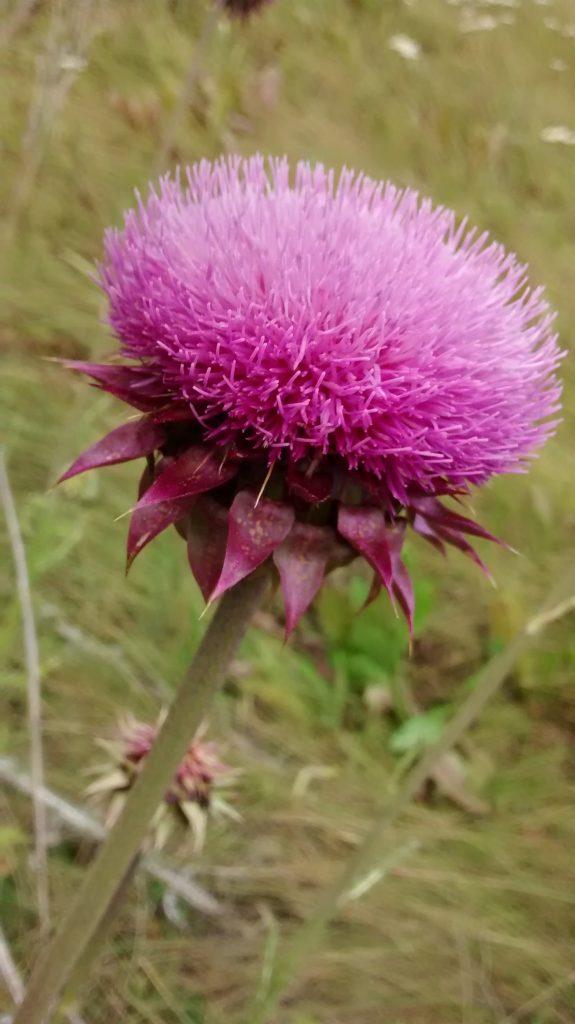 Reserva Tamango: fiore patagonico