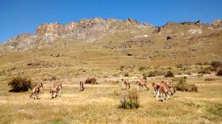 Parque Patagonia: guanacos al Lagunas Altas trail