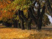 Herbst in Masuren, Foto: Polska Organizacja Turystyczna