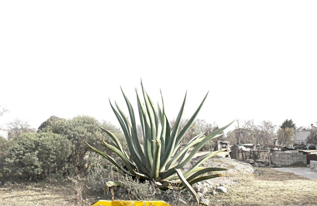 vegetación en acajete puebla