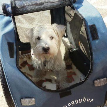 Ernie in his Doggyhut