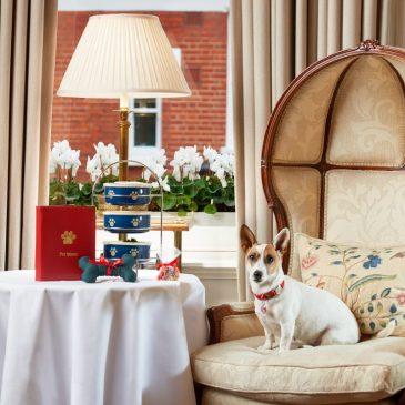 A dog enjoys the afternoon tea at Egerton House Hotel