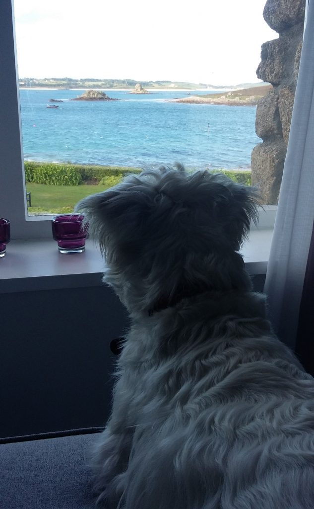 Ernie gazes out at the beautiful blue water surrounding Karma St Martin's, Isles of Scilly