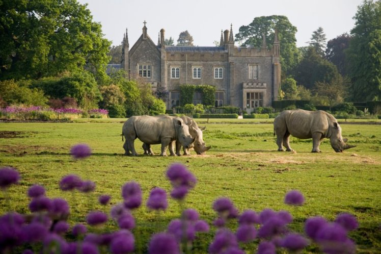Rhinos in front of house