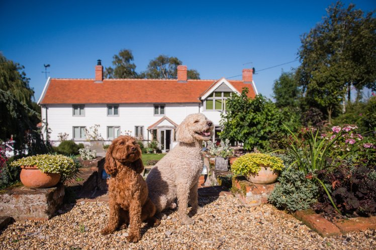 Resident labradoodles Teddy and Amber at Letheringham Water Mill